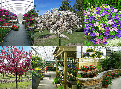 We Stock Our Nursery With A Wide Variety Of Trees Shrubs Perennials And Annuals All Certified By The Michigan